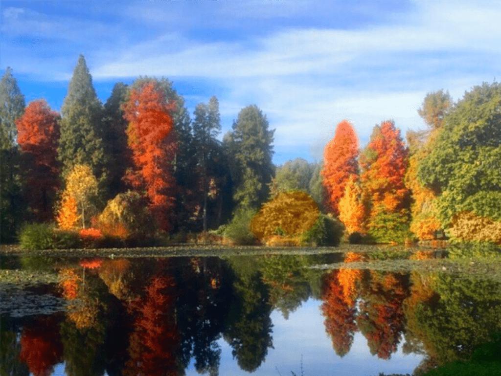 Bedgebury Lake